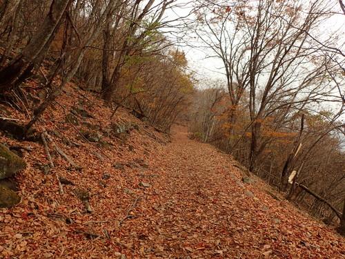 落ち葉が積もった登山道