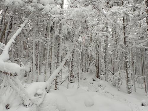 モノトーンの樹林帯
