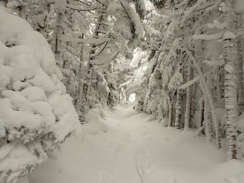 茶臼山登山道